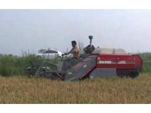 星光至尊750高效水稻收割机作业视频