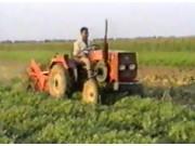 安徽淮丰4HW-70D花生收获机作业视频