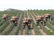 Pellenc葡萄收割机作业视频
