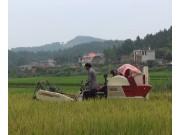 沃得迅龙水稻收割作业视频(二)