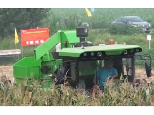 山东常林4YZP-4A玉米收获机作业视频