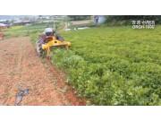 珲春创一-DRGH-1000花生收获作业演示视频