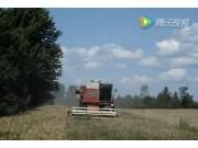 麦考密克收获机收获含有大量杂草的小麦