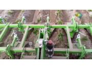 比利时AVR公司Ecoridger土豆除草机