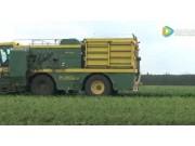Ploeger公司BP2100豌豆收获机