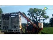 西蒙胡萝卜起收机和牵引拖车共同作业