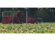 De cloet公司两行烟草收获机-作业视频