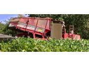 SPAPPERI公司RA942烟草收获机-作业视频