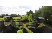 Triple B农场烟草收获场景-作业视频