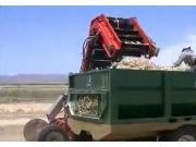 Red Ant公司洋蔥收獲機-作業視頻