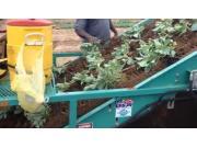 Shuknecht公司蔬菜秧苗起收机-作业视频