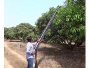 HECTARE公司手持式芒果采摘器-作业视频