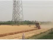 雷沃GM80小麦机作业视频