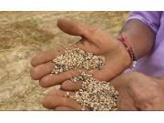 PUNNI公司自走式大豆收获机