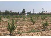 植保无人机桃树叶面肥喷洒