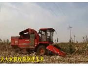 天人TR9988收获倒伏玉米作业视频