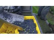 Haven公司蓝莓收获机作业视频