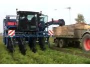 阿萨利SP4000E自走式胡萝卜收获机作业视频