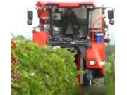 ERO公司自走式葡萄收获机作业视频