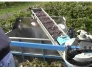 Blueline公司Columbia葡萄收获机作业视频