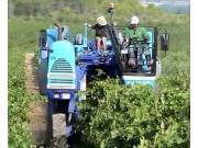BRAUD公司自走式葡萄收获机作业视频