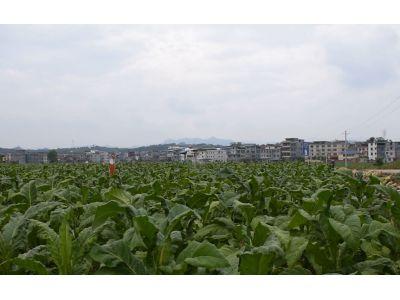 天鹰兄弟植保无人机江西安远县烟草打药视频