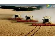 多台科乐收(CLAAS)LEXION收割机同时收割小麦视频