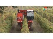 博格公司V-TrackTRS30葡萄橄榄收获机作业视频
