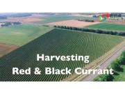非常神奇的农业机械——红醋栗收获机械