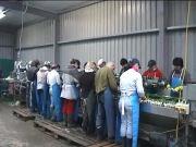 荷兰christiaens葱洗切线
