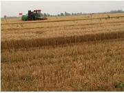 中收4LZ-8B小麦机作业视频