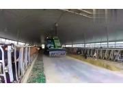 什么叫养牛自动化看看外国人是怎么样牛的