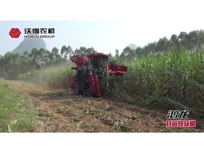 沃得鸿龙甘蔗收获机作业视频