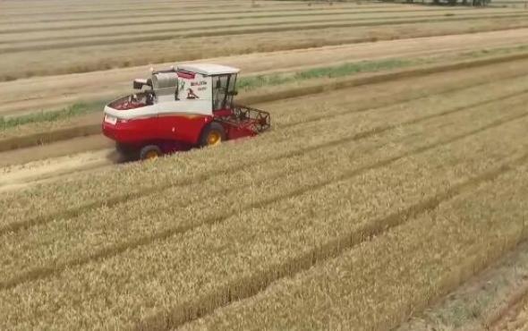 雷沃谷神4LZ-8E2(GE80)粮食含杂率偏高保养维护视频
