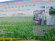 久富牌机插侧深施肥助力农业绿色高效发展