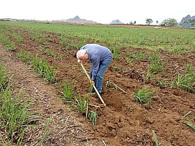 老布谈农机农艺第二讲:土壤深层探究