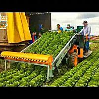 意大利(ORTOMEC)8700型圆包茎生菜收获机
