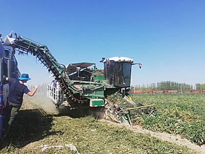 意大利MTS番茄收获机 THX