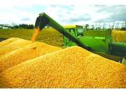 中國玉米市場長期走勢向好