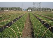 農業信息化如何迎風起飛