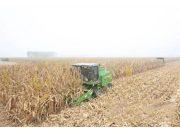 从人收到机械收穗再到机械收粒 玉米全程机械化还要过几关