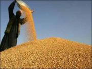 三大主粮收购价全线下跌 农民收入恐损千亿