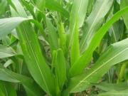 病虫害测报数字化支撑现代农业建设
