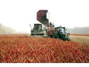 全國農作物綜合機械化水平預計今年超過62%