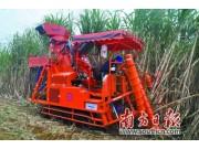 五方聯手打造糖蔗機械化生產示范基地