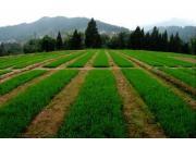 信息化为现代农业增添新动力