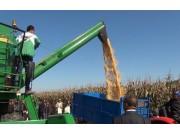 南方型玉米籽粒機或將另起爐灶