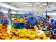 中央财政5年累计发放36亿元补助农产品加工业