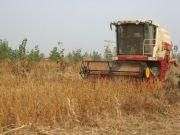 山东力争恢复大豆种植大省地位