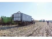 黑龙江:对接市场需求保障种粮收益
